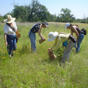 Greenhouse volunteers collecting seed in a field of flowers at the Fort Worth Nature Center