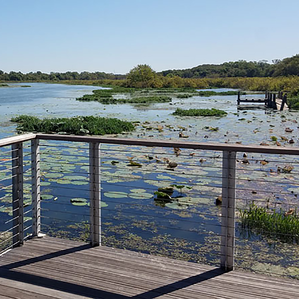 View of lily pads and the Lotus Marsh from the Boardwalk at the Fort Worth Nature Center