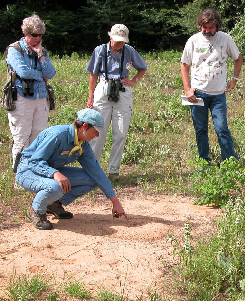 Suzanne Tuttle pointing to harvester ants at the Fort Worth Nature Center