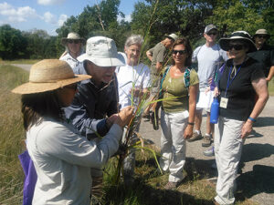 Naturalist helping visitors learn about plants