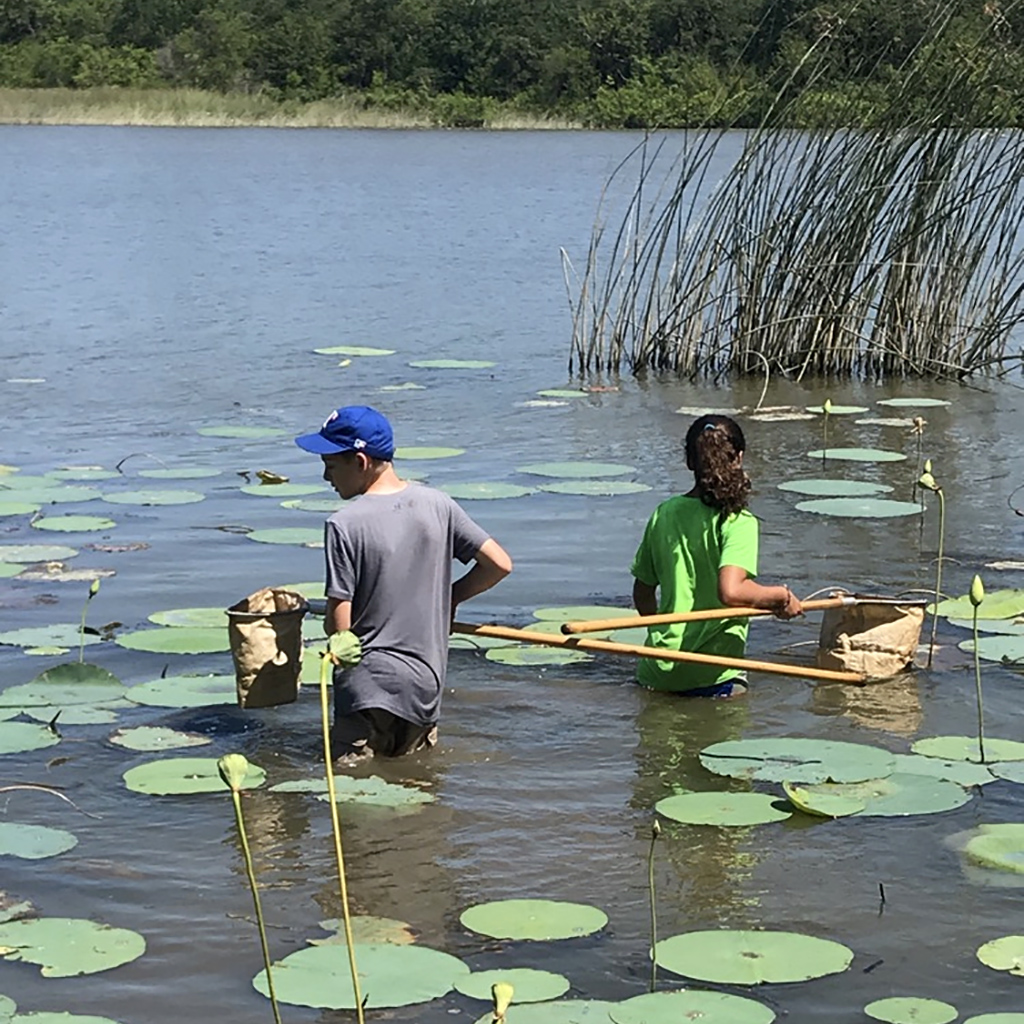 Students with nets wading in the Lotus Marsh at the Fort Worth Nature Center
